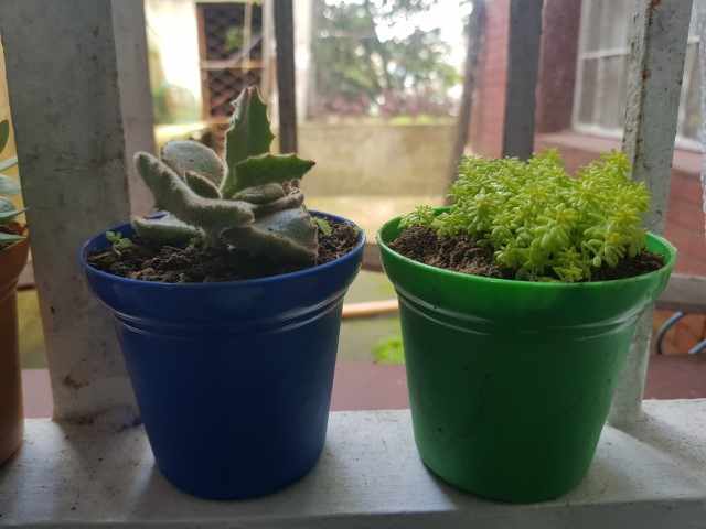 succulents getting light